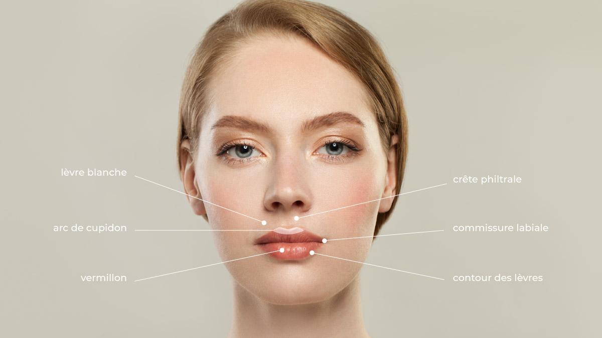 schéma lèvres